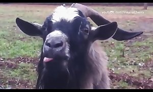 Skrillex and Damian Marley - Get there come Loaf Dem (Animal Cover) [only animal sounds]