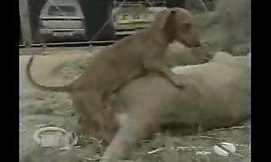 Disfrutando de perrito